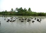 安徽安庆桐城市30亩养殖场 山地 鱼塘虾场转包 转让费:28万元