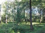 黑龙江伊春乌伊岭区1500亩林地转让转让费:120万元