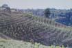 云南临沧耿马傣族佤族自治县1060亩园地转让200万元