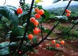 湖南郴州238亩农场转让转让费:85万元