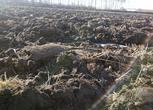 吉林 松原9375亩耕地 水田 旱地转让