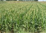 甘肃白银景泰县200亩养殖场 设施农用地 耕地转让 面议