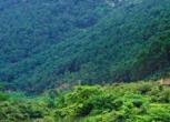 广西钦州灵山县2500亩林地转让 面议