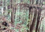 福建三明427亩林地转让 面议