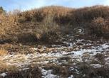河北承德丰宁满族自治县2500亩山地 林地转让 转让费:85万元