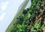 山东威海40亩山地转让面议