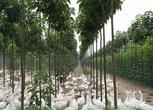 河南周口项城市300亩养殖场 苗圃转让/合作 面议