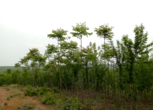 湖北荆门钟祥市200亩山地 林地转让 转让费:140万元