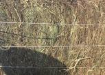 黑龙江绥化安达市3000亩草原转让400万元