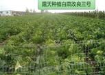 5亩菜园地3万元租种13年有水有电有证件及瓜果蔬菜商标