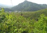 安徽池州130亩丘陵山地40年经营权转让