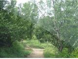 低价转让97亩农业用地 经济林 从化鳌头镇  租金己经全部交清