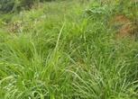租卖广西柳州10亩山地与田地