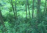 贵州遵义50亩草场出租