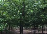 上海朱家角65亩林地转让面议