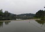 简阳市南河村60亩鱼塘转让
