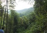 浙江衢州衢江区1000亩林地转包