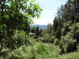 海南海口秀英區500畝林地 — 其他林地轉讓
