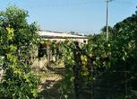 廉江平坦成熟养殖场,50亩果园地出租 面议