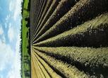 北安卫东林场2550亩农用地出租 面议