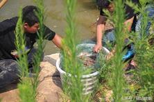 河南一个小县城搞淡水养殖基围虾 年收入过百万亩产1500斤!
