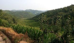 200畝農用地轉包 600000元