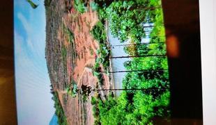 130畝農用地轉讓 70萬元