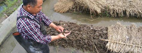 水蛭蚂蟥养殖技术大剖析及市场行情价格分析,水蛭养殖场地出租出让