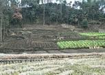 5亩农用地合作入股 面议