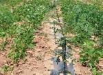 种植500亩花椒国家有补贴吗?一亩地能赚多少钱?