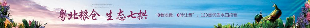 广东清远阳山七拱130亩优质水田零转让费出租