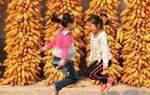 """权威!首届""""中国农民丰收节""""系列活动—地方省市区"""