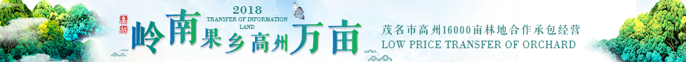 广东茂名高州荷花镇8133龙眼果园转包
