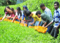 如何将体验农业做到极致?这几点经验务必要看