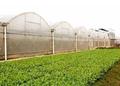 【政策】2019年国家重点补贴的农业项目来了!合作社补贴多少?