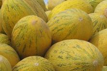 吃哈密瓜对人体有什么好处?种植成本