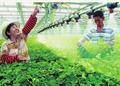 庆祝农村改革40年图说三农新变