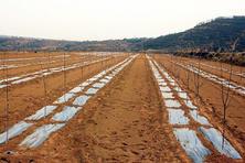 山东商河保驾护航春季农业生产(图)
