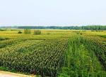 宁夏稳步推进有机农产品发展(图)
