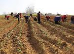 新疆加大支农贷款力度助力春耕备耕(图)