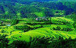 """推动湖南农业沿""""一带一路""""走向世界(图)"""