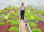西安:高山蔬菜走出秦嶺(圖)