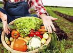部分耕地改種蔬菜 長沙蔬菜增產(圖)