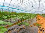 大項目帶動壽光農業新發展(圖)