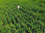 河南南樂縣域生態農業信息化系統領跑全國(圖)