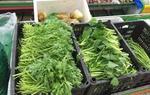 貴州省農科院科技助力威寧蔬菜產業發展(圖)