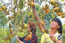 """安徽省农业产业化""""花果飘香""""(图)"""