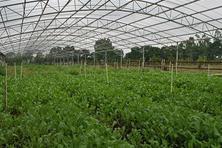 三亚加快建设常年蔬菜基地(图)