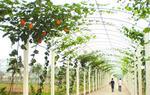 我国农民合作社和家庭农场持续健康发展(图)