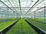 白銀會寧蔬菜產業蓬勃發展(圖)